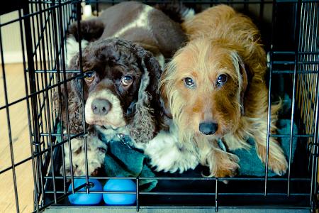 two little doggies © Furocious Foto